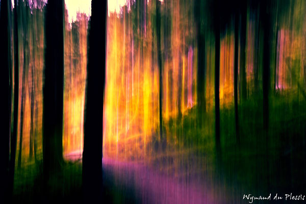 Luxury Fine Art Prints - FOREST AT SUNSET