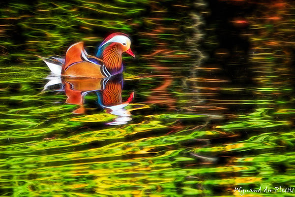 Luxury Fine Art Prints - MANDARIN BEAUTY