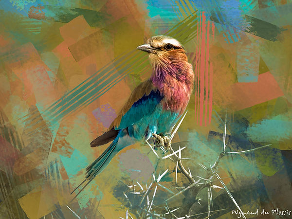 Bird Photo Art - Lilac-breasted roller - fine art prints on the Art Print Media of your choice