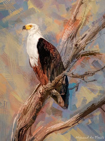 Bird photo to bird art printed on canvas - AFRICAN FISH EAGLE