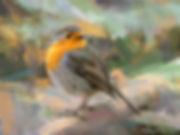 Bird photo to bird art printed on canvas - EUROPEAN ROBIN