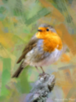 Bird painting printed on canvas - EUROPEAN ROBIN