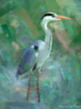 Bird painting canvas print - GREY HERON