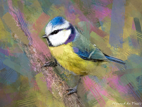 Bird Photo Art - Blue tit - fine art prints on the Art Print Media of your choice
