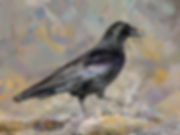 Bird painting printed on canvas - CARRION CROW