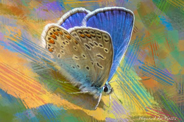 BUTTERFLIES & DRAGONFLIES art gallery