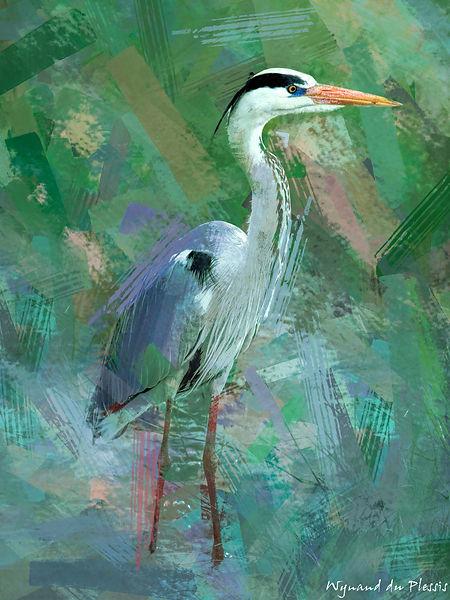 Bird Photo Art - Grey heron - fine art prints on the Art Print Media of your choice