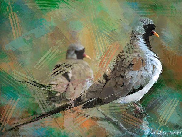 Bird Photo Art - Namaqua dove - fine art prints on the Art Print Media of your choice
