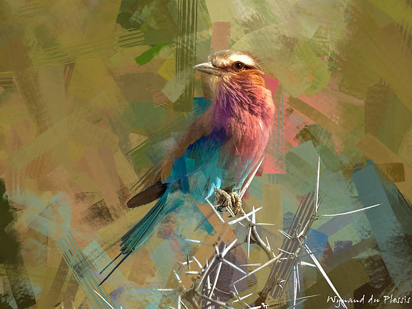 Bird painting canvas print - LILAC-BREASTED ROLLER