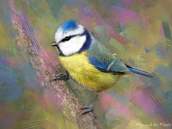 Bird painting printed on canvas - BLUE TIT