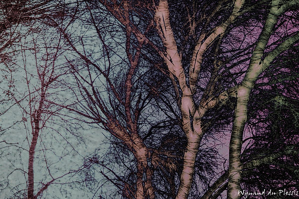 Luxury Fine Art Prints - WINTER ABSTRACTION-3