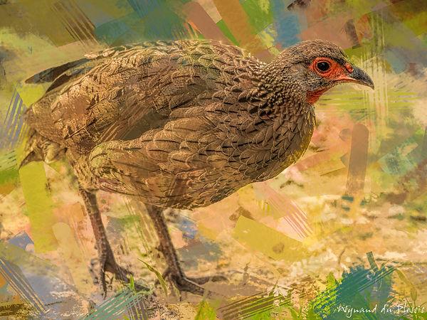 Bird photo to bird art printed on canvas - SWAINSON'S SPURFOWL