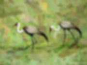 Bird painting printed on canvas - WATTLED CRANES