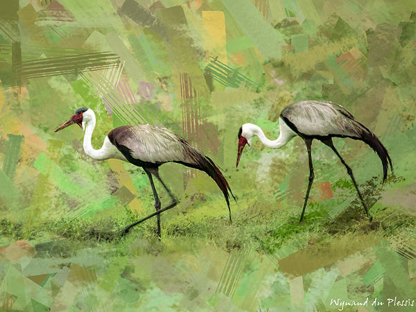 Bird Photo Art - Wattled crane - fine art prints on the Art Print Media of your choice