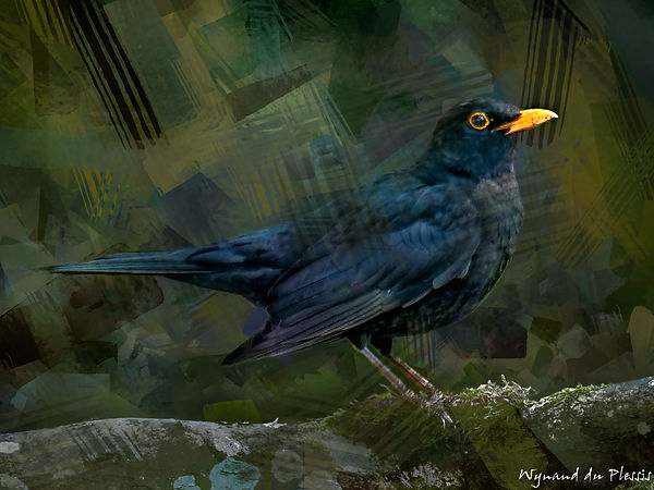 Bird painting canvas print - BLACKBIRD