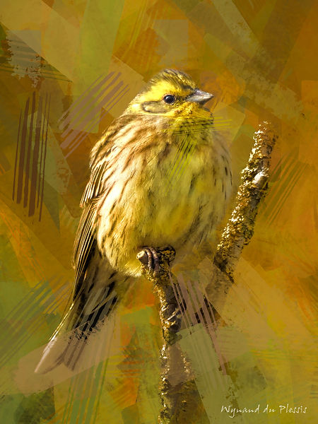 Bird Photo Art - Yellowhammer - fine art prints on the Art Print Media of your choice