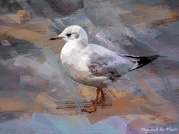 Bird painting canvas prints - BLACK-HEADED GULL