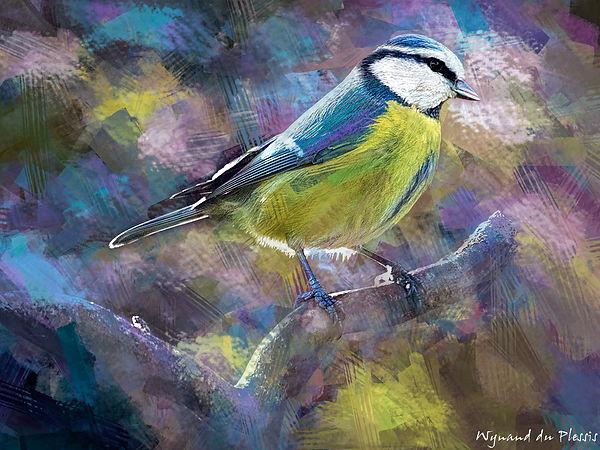 Bird painting printed on canvas - BLUE TIT