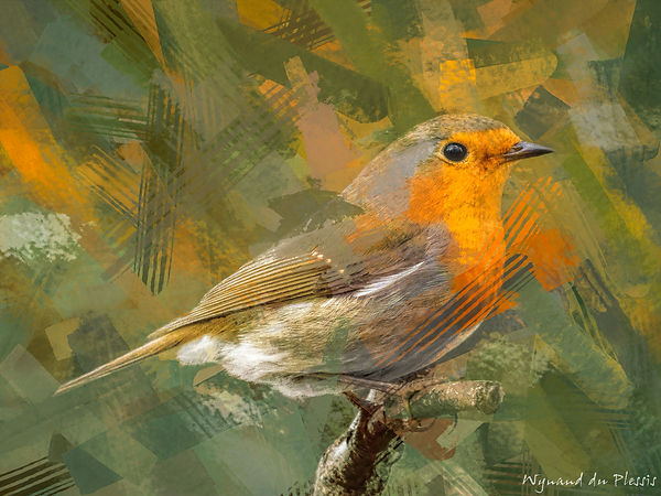 Bird Photo Art - European robin - fine art prints on the Art Print Media of your choice