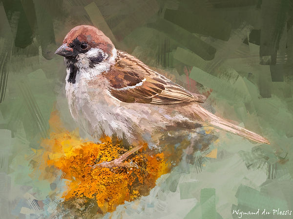 Bird Painting Canvas Print - EURASIAN TREE SPARROW