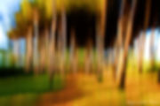 Luxury Fine Art Prints - FOREST BLUR - 1