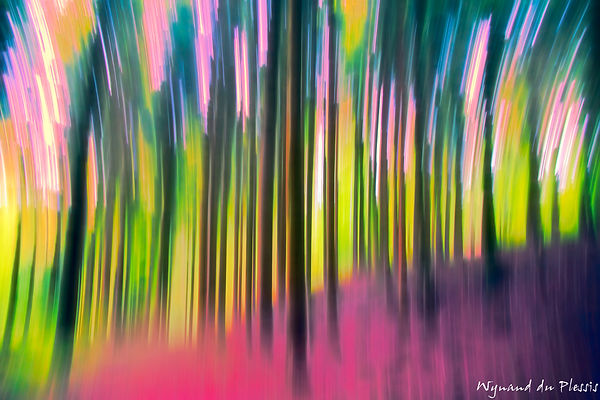 Luxury Fine Art Prints - FOREST IN SPRING