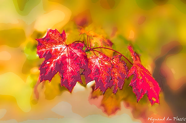 Luxury Fine Art Prints - AUTUMN LEAVES