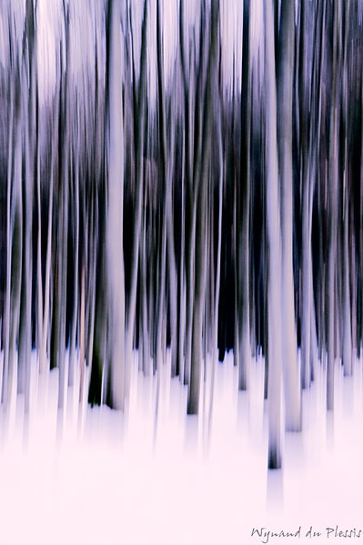 Luxury Fine Art Prints - WHITE FOREST GLOW