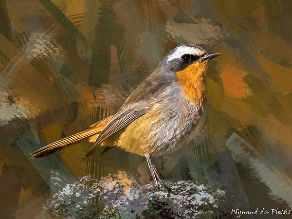 Bird painting canvas print - CAPE ROBIN