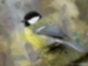 Bird painting canvas prints - GREAT TIT