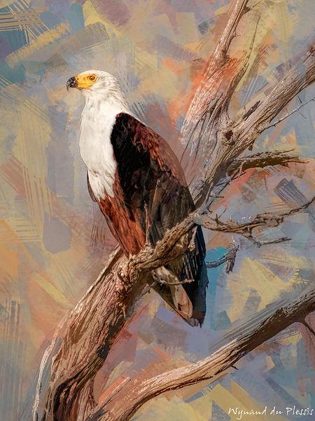 Bird Photo Art - African fish eagle - fine art prints on the Art Print Media of your choice