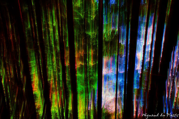 Luxury Fine Art Prints - SPARKLING FOREST