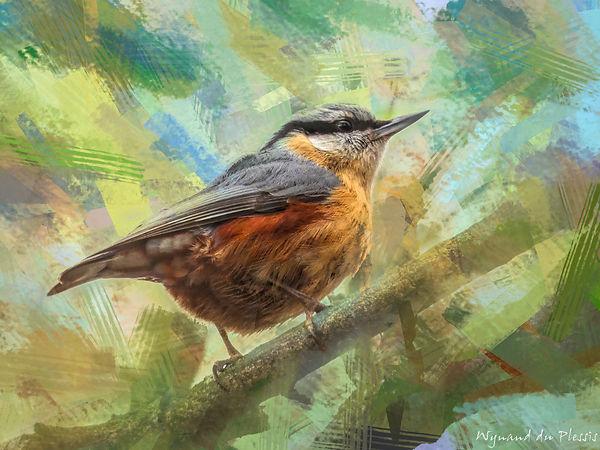 Bird Photo Art - Eurasian nuthatch - fine art prints on the Art Print Media of your choice