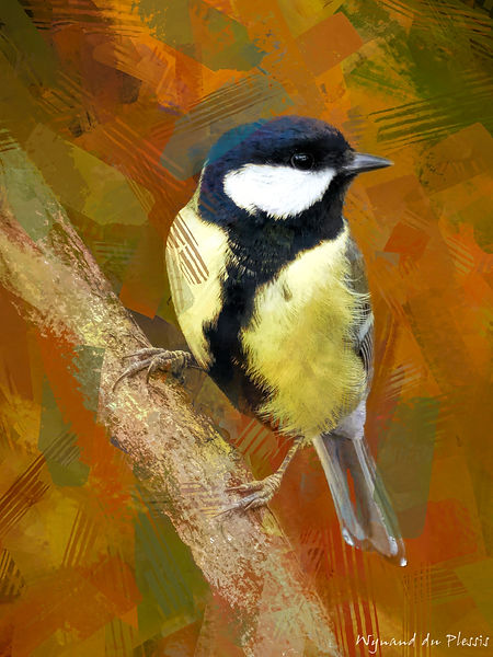 Bird Photo Art - Great tit - fine art prints on the Art Print Media of your choice