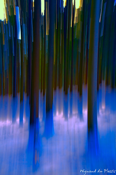 Luxury Fine Art Prints - BLUE FOREST GLOW