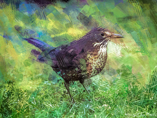 Bird painting canvas prints - BLACKBIRD