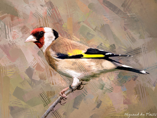 Bird painting canvas print - EUROPEAN GOLDFINCH
