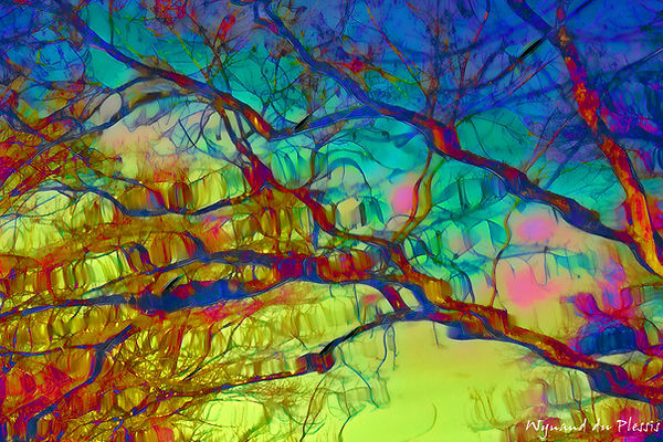 Luxury Fine Art Prints - REFLECTED BRANCHES