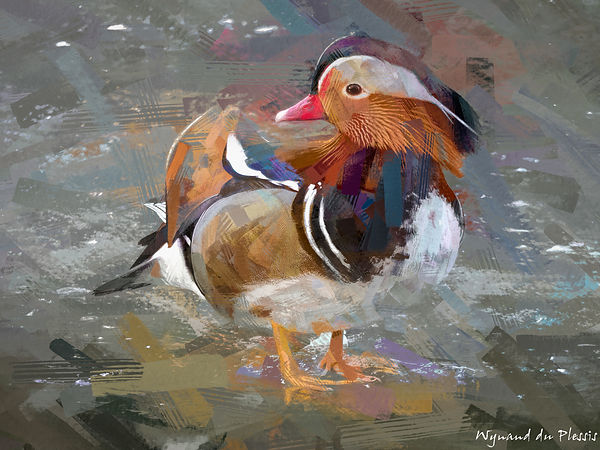 Bird painting canvas print - MANDARIN DUCK