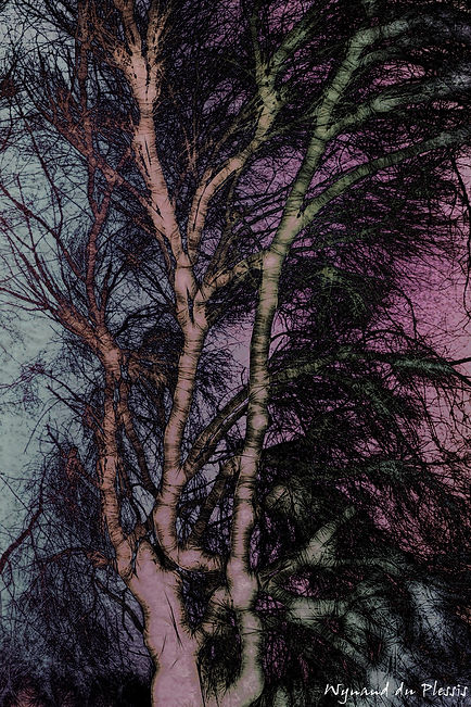 Luxury Fine Art Prints - WINTER ABSTRACTION-2