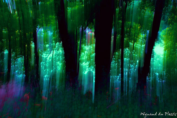 Luxury Fine Art Prints - EMERALD FOREST
