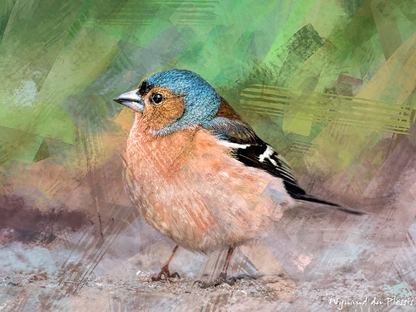 Bird painting printed on canvas - COMMON CHAFFINCH