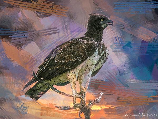 Bird photo to bird art printed on canvas - MARTIAL EAGLE