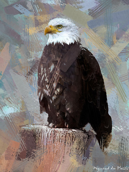 Bird Photo Art - Bald eagle - fine art prints on the Art Print Media of your choice
