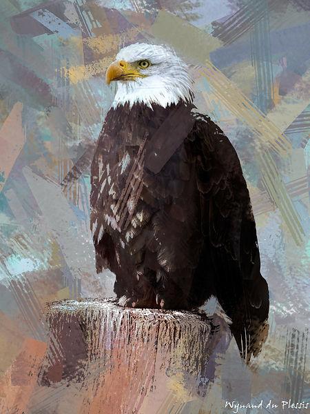 Bird Photo Art - Bald eagle - fine art prints on the Art Print Media of your choice