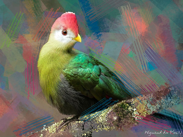 Bird photo to bird art printed on canvas - RED-CRESTED TURACO