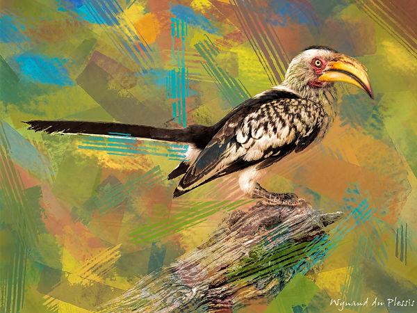 Bird Photo Art - Yellow-billed hornbill - fine art prints on the Art Print Media of your choice