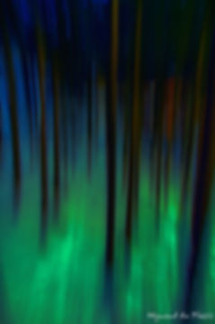 Luxury Fine Art Prints - GREEN FOREST BLUR