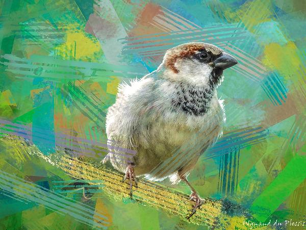 Bird photo to bird art printed on canvas - HOUSE SPARROW