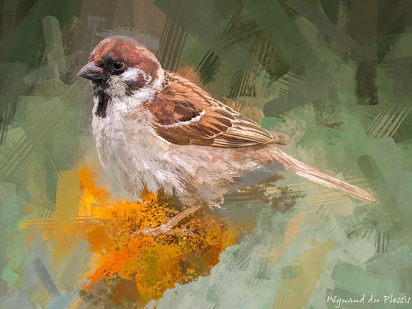 Bird Photo Art - Eurasian tree sparrow - fine art prints on the Art Print Media of your choice